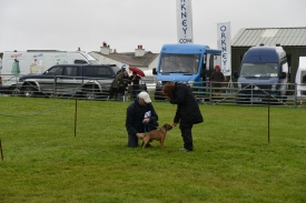 The Terrier class in the dog show